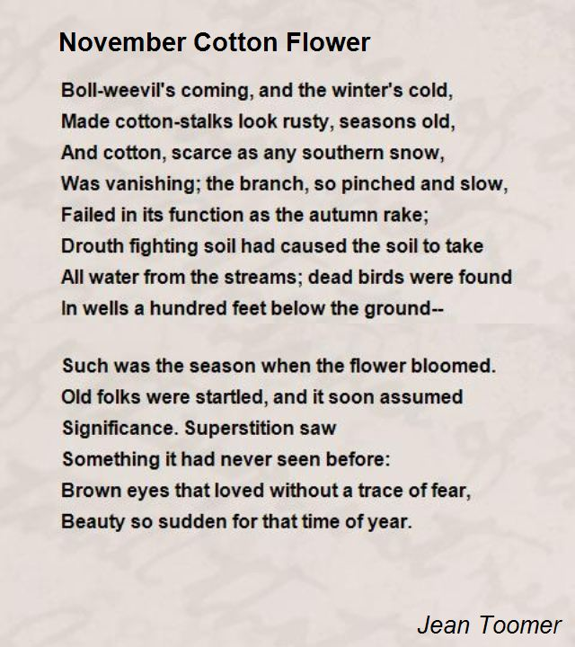 november-cotton-flower